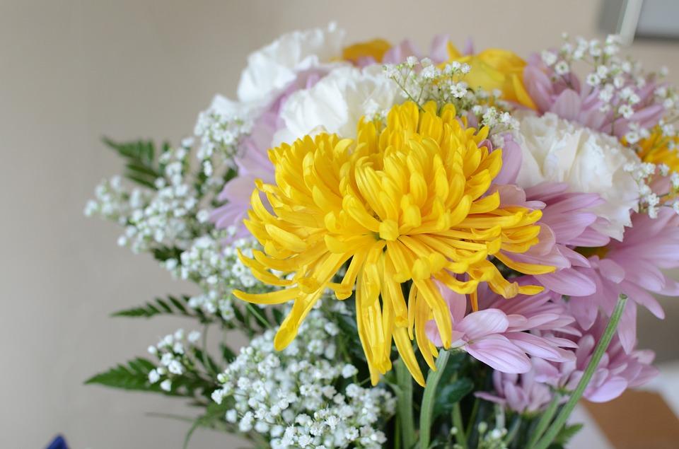 flowers-2266785_960_720.jpg